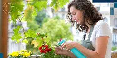 Como montar uma horta no seu apartamento?